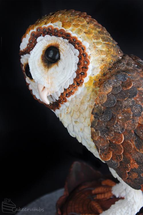 Cakecrumbs' Tasmanian Masked Owl Cake 04